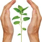 handsplant